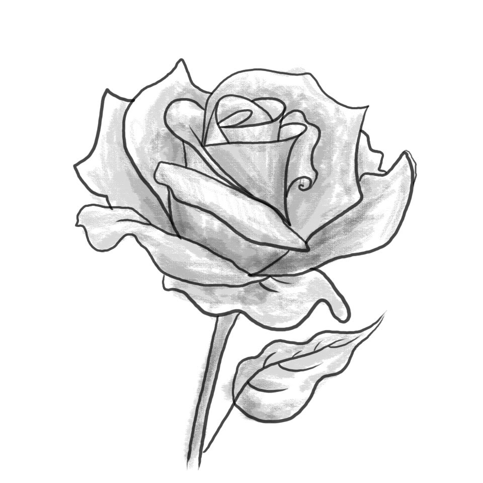 960x960 Black And Grey Rose Drawing