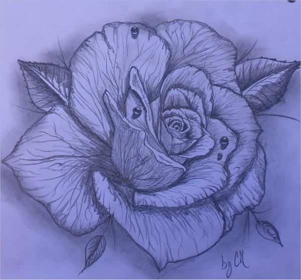 600x558 Rose Drawings