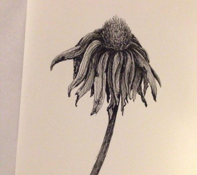 678x600 Dead Flower Drawing Best 25 Dead Rose Tattoo Ideas