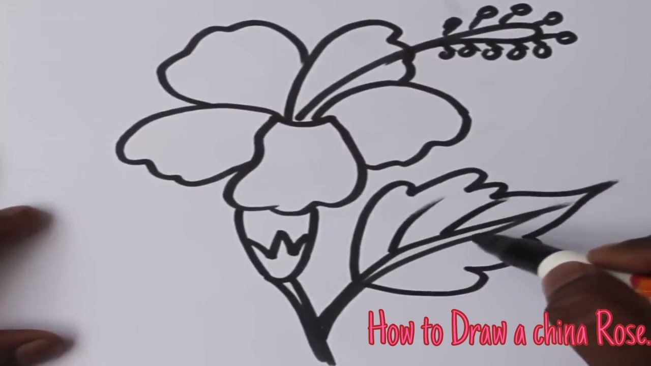 1280x720 How To Draw A China Rose Art For Kids.