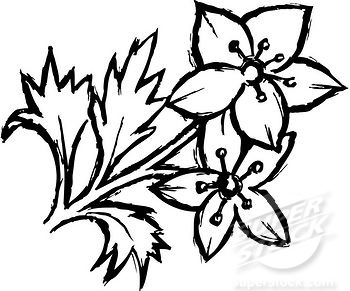 350x291 Black And White Flower Drawing Same Day Flower Delivery