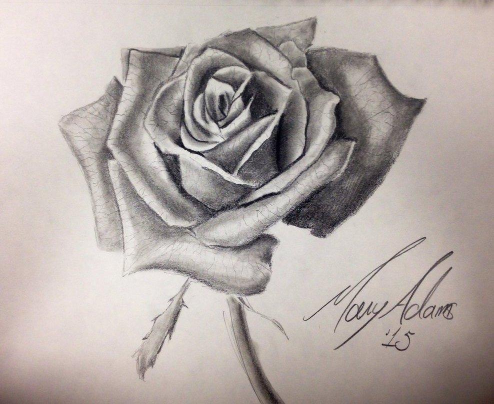 988x809 Knumathise Rose Drawing Images