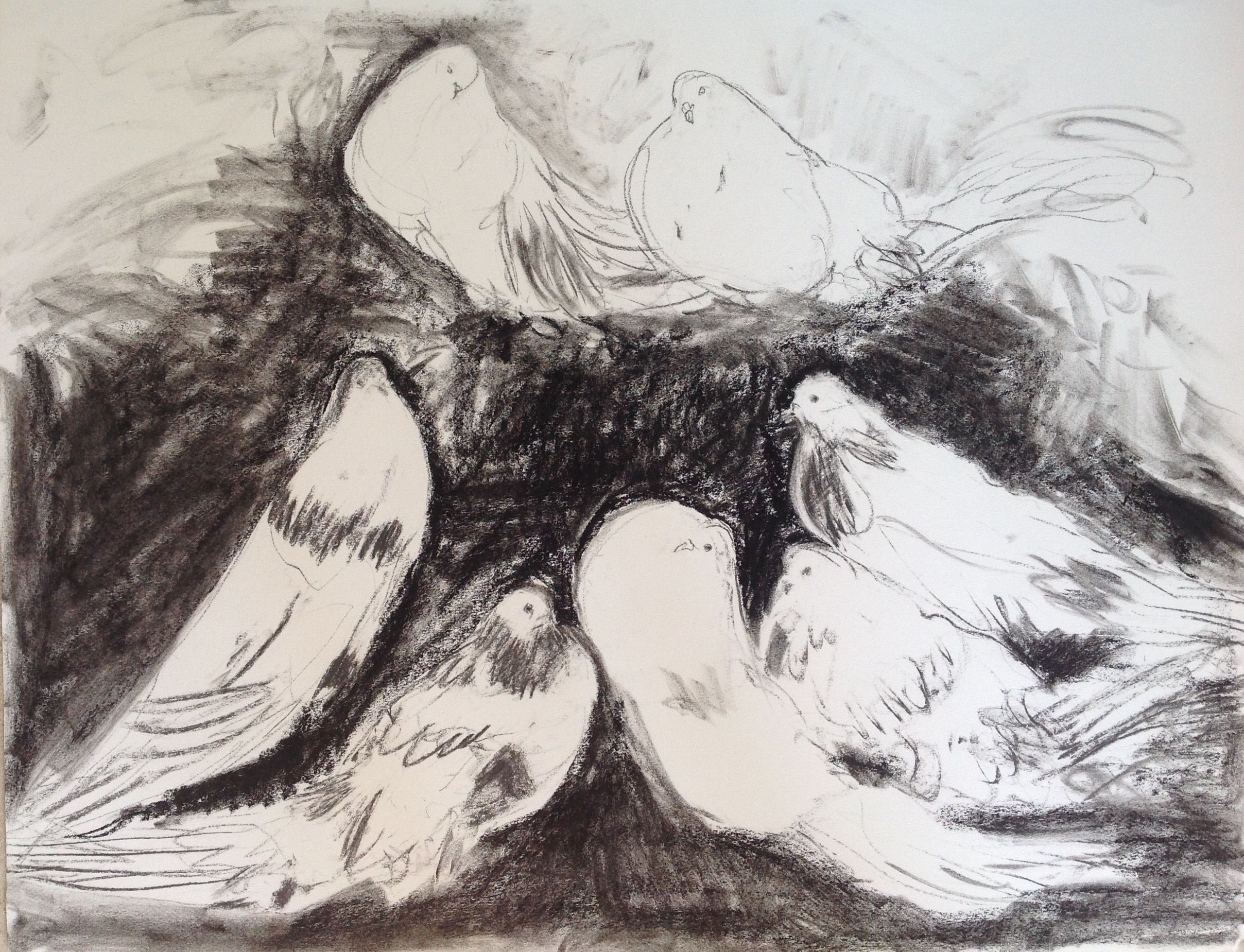 2416x1849 Dove,doves,charcoal Drawing,birds,black And White Birds Charcoal