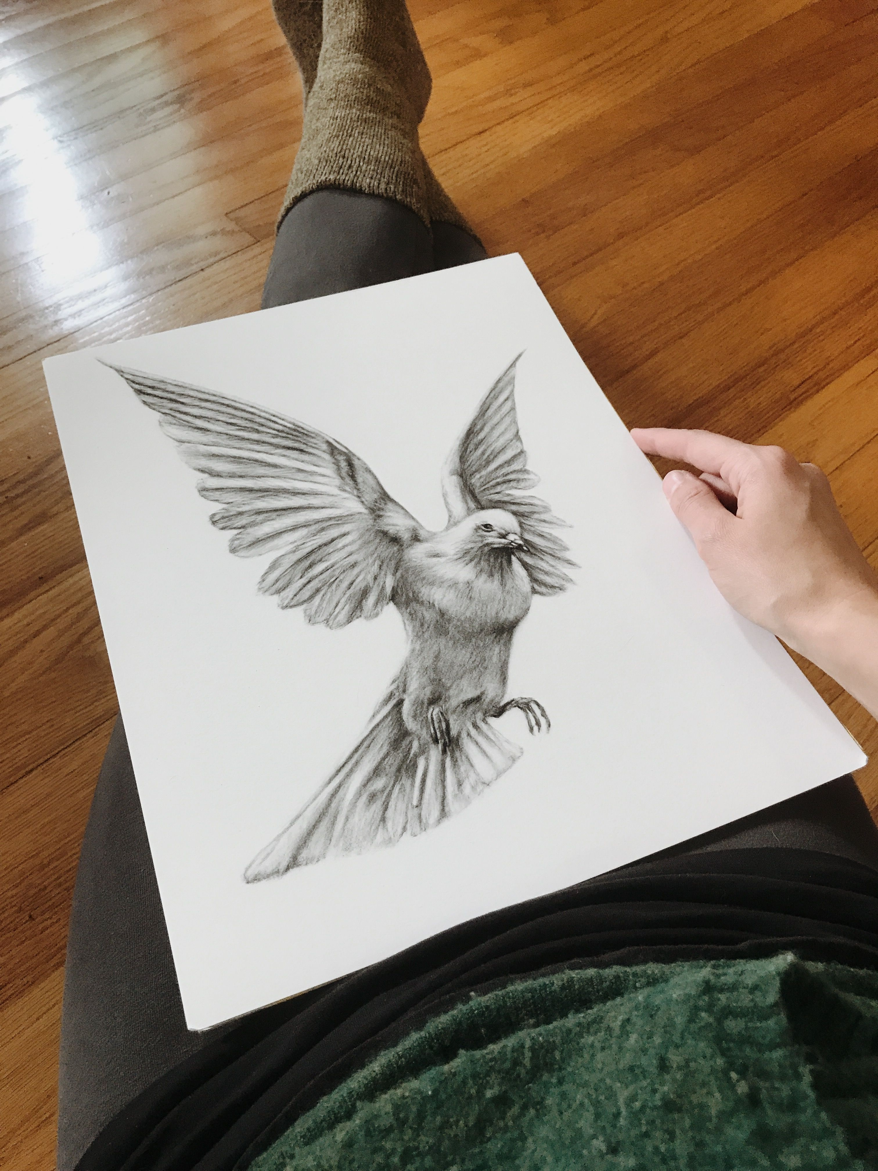 3024x4032 Dove Charcoal Drawing. Black And White Dove Design. Flying Dove