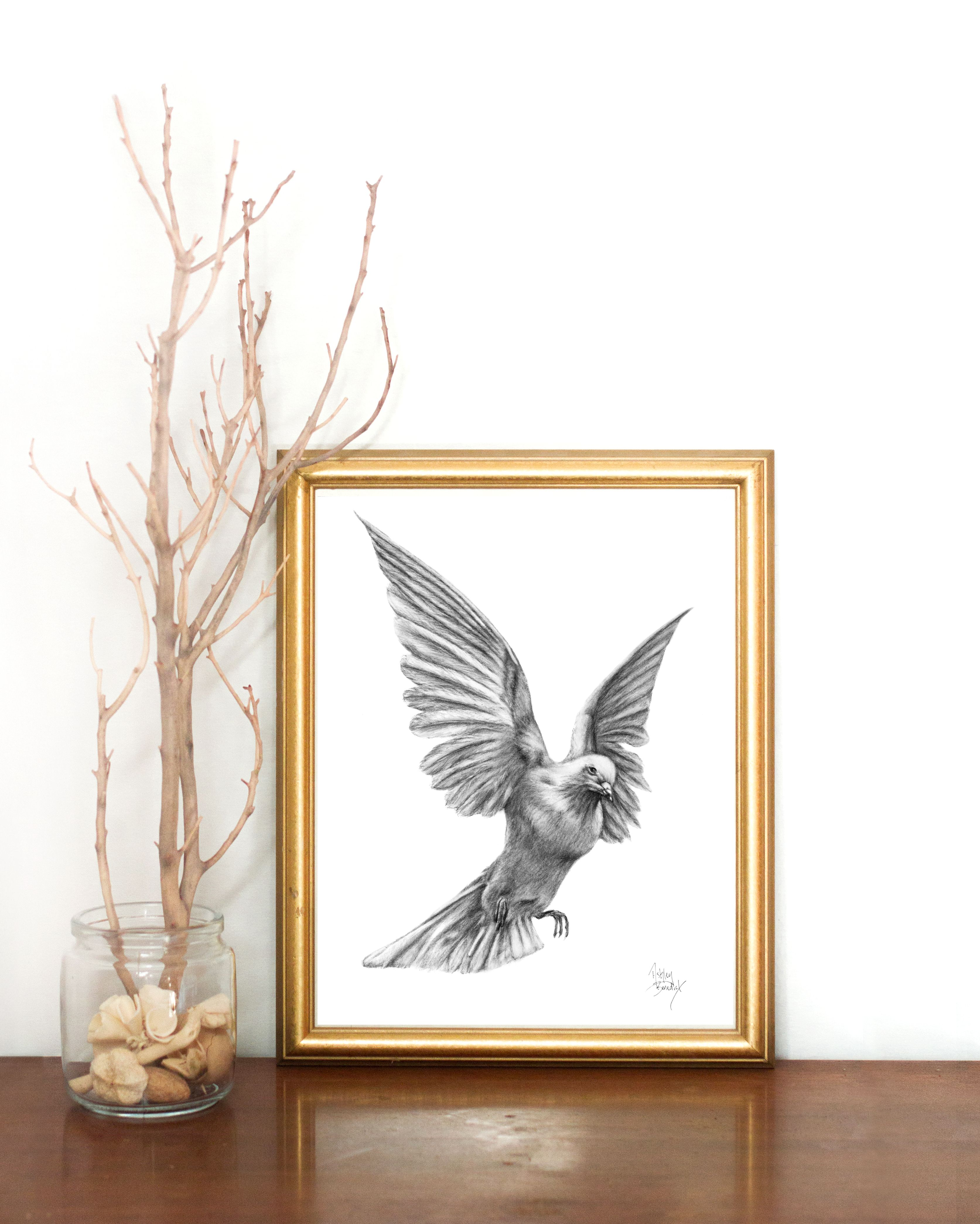 3346x4183 White Dove Charcoal Drawing Click To Purchase Or See More Original