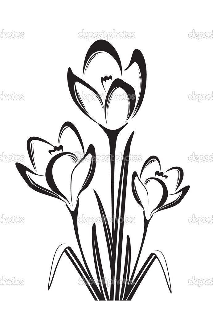 691x1024 Collection Of Flower Black And White Drawing High Quality