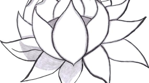 570x320 Simple Flower Drawing Flowers For Simple Lily Flower Drawing