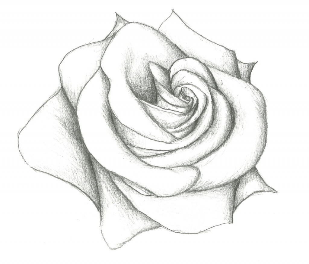 1024x877 Flower Drawing Flowers Drawings In Pencil For Kids Simple Rose Jpg