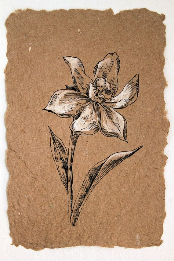 570x855 125 Best Flowers Drawing Of Daffodil Images