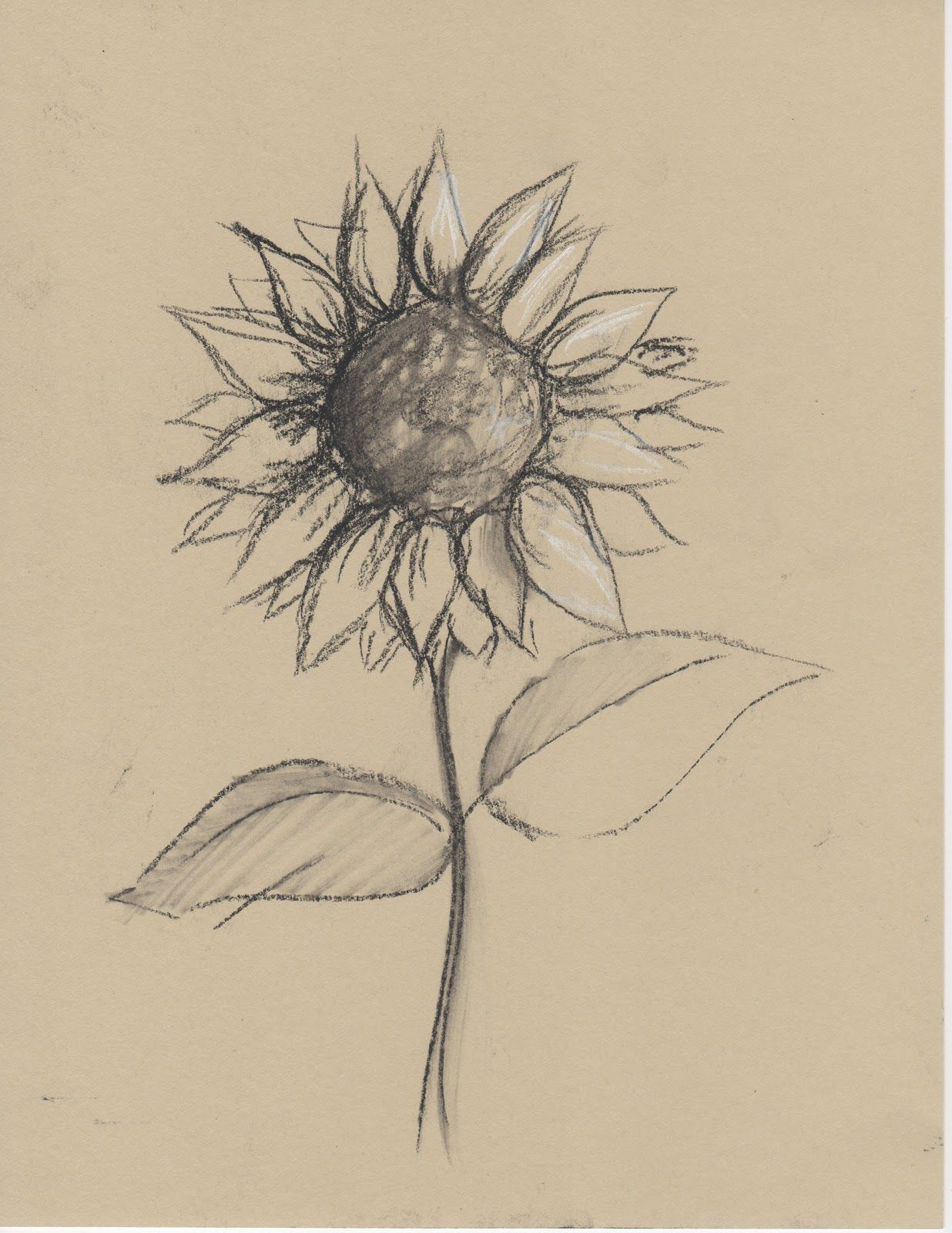 1236x1600 Black and white sketches of flowers Any Medium Even Just Pencil