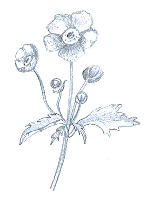 483x637 Flower Sketches