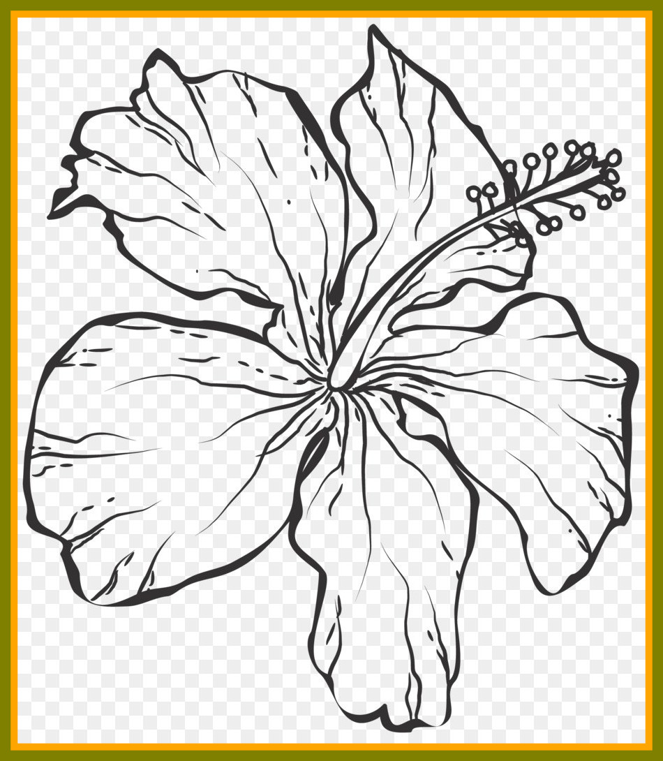 950x1090 Incredible Line Art Black And White Drawing Png Pic Of Flower