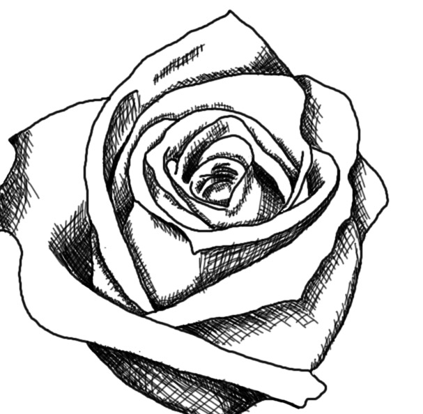 607x594 Pictures Black And White Sketches Of Roses,