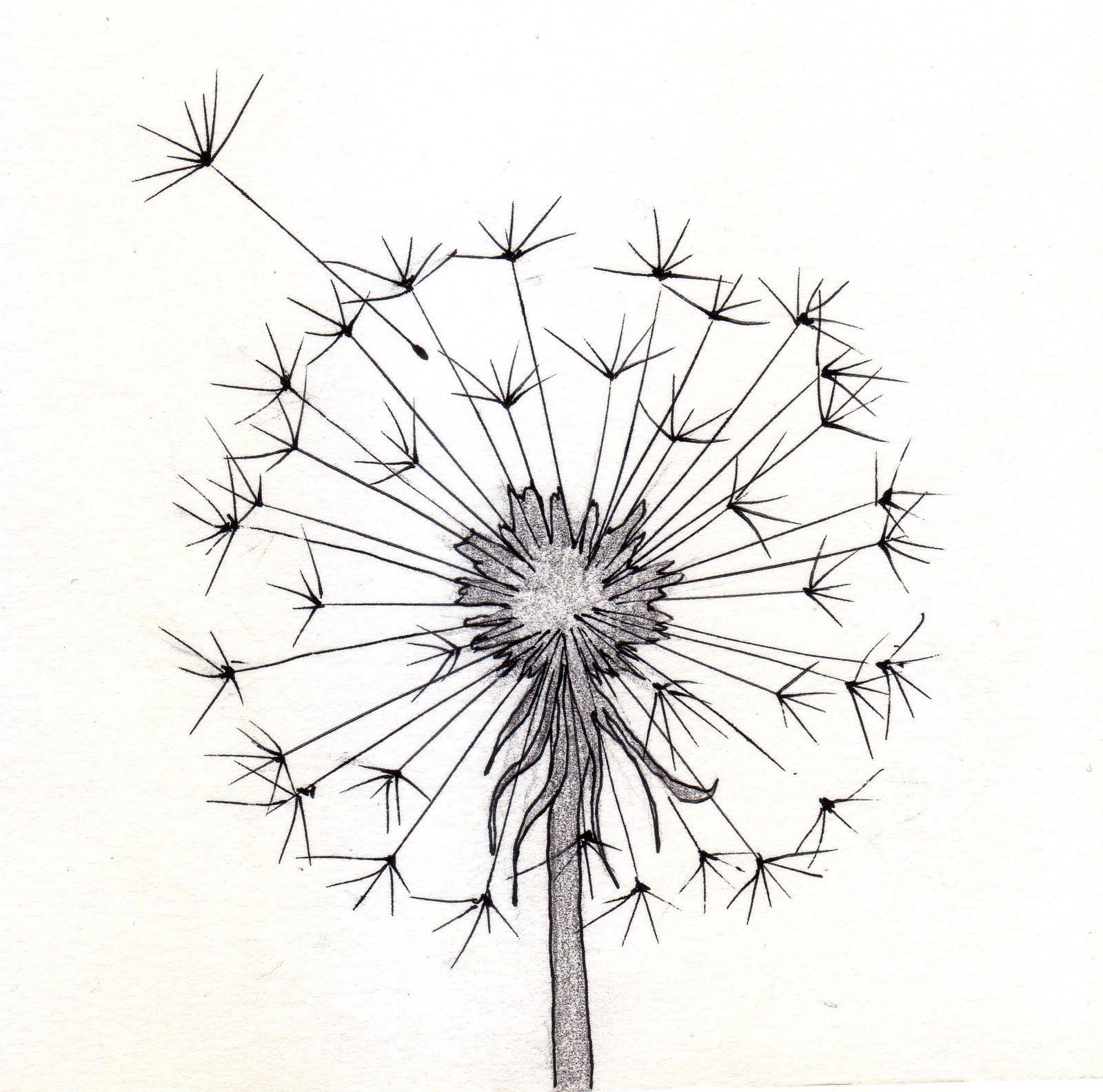 1600x1584 Dandelion Sketch 1
