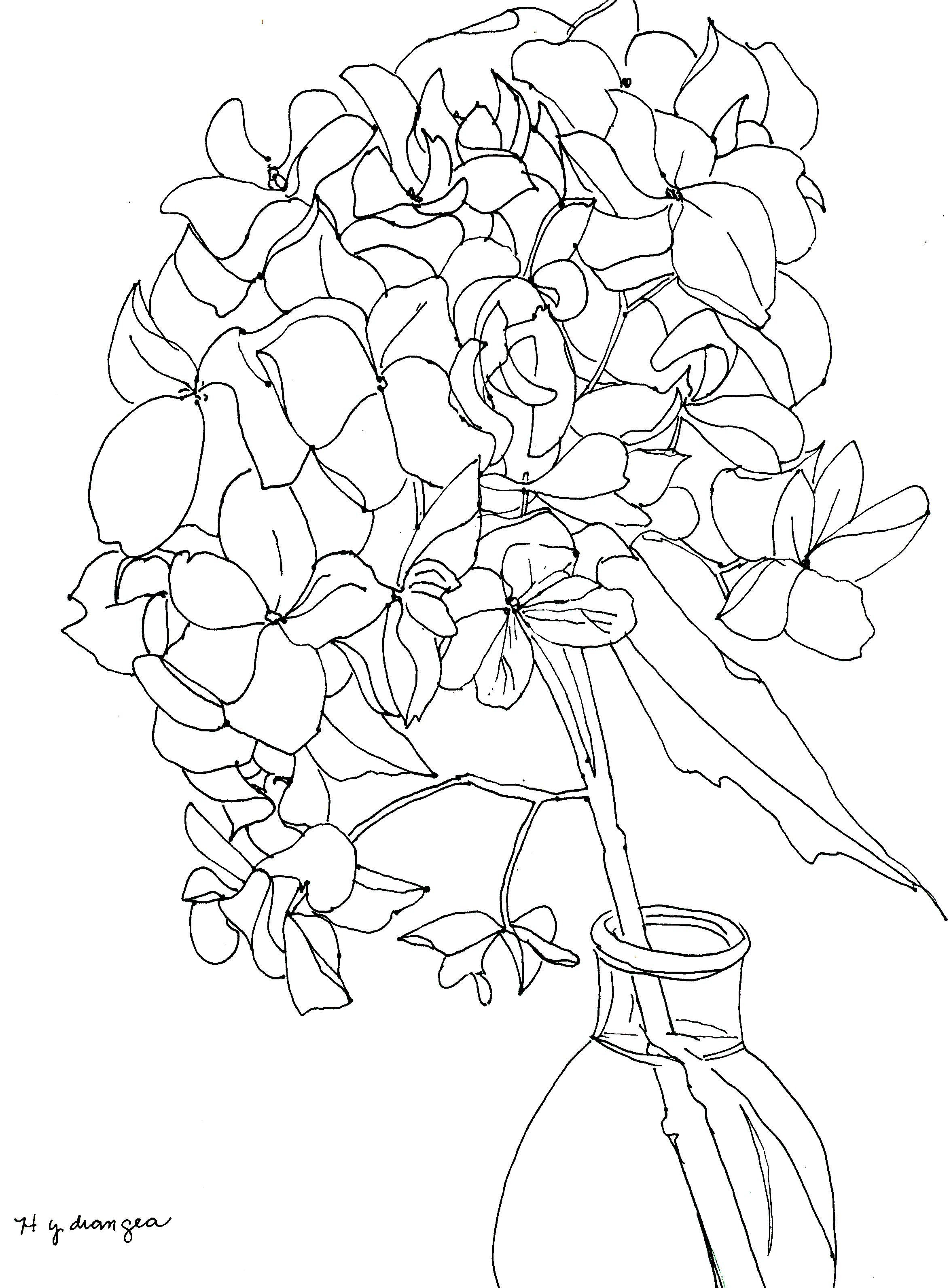 2346x3184 Line Drawing Of Hydrangeas