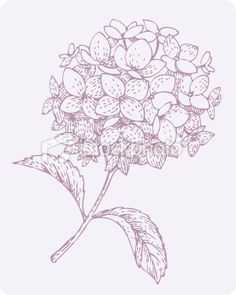 236x295 Seamless Pattern Hortensia Hydrangea Black Amp White