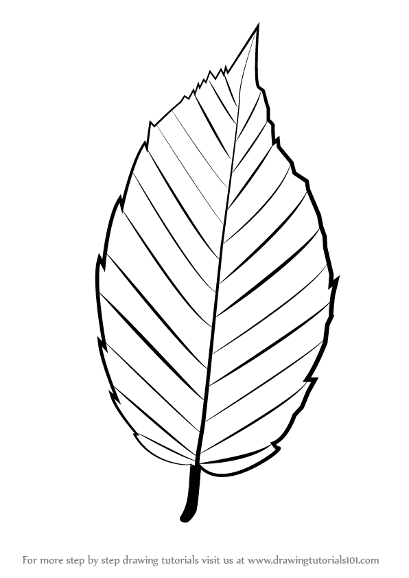 596x842 Learn How To Draw A Leaf (Plants) Step By Step Drawing Tutorials