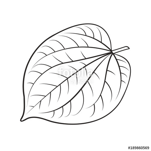 500x500 Black Outline Betel Leaf Vector Drawing Stock Image And Royalty