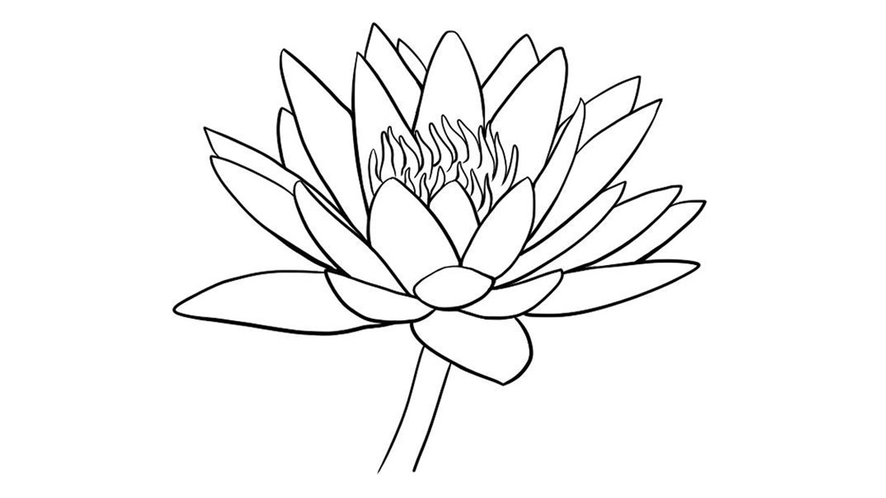 1280x720 How To Draw Water Lily Easily Step By Step