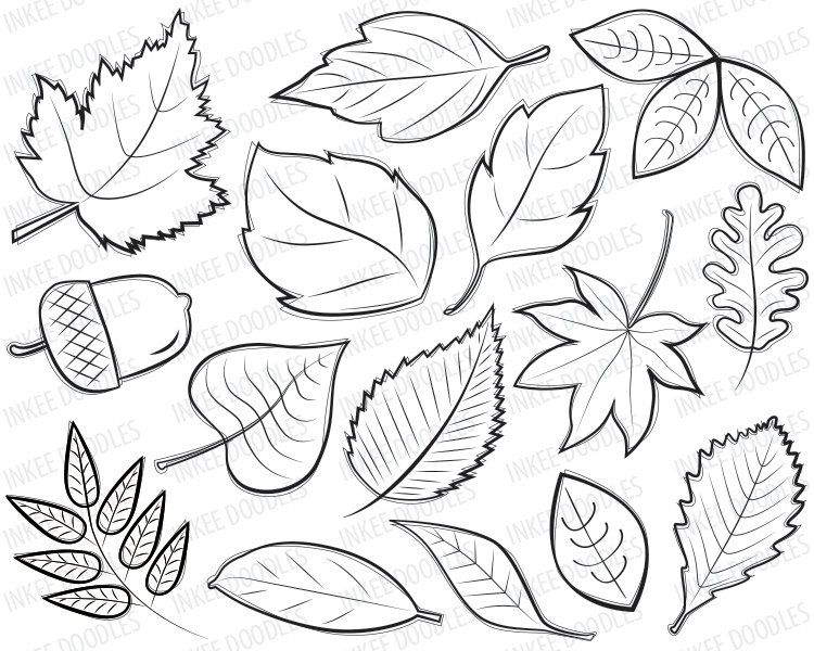 750x600 Autumn Leaves Digital Stamps Clipart Black By Inkeedoodles