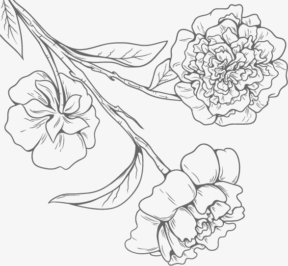 587x542 Black And White Flower Line Drawings