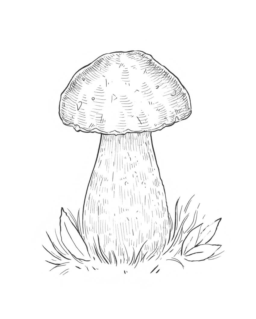 850x1060 How To Draw A Mushroom