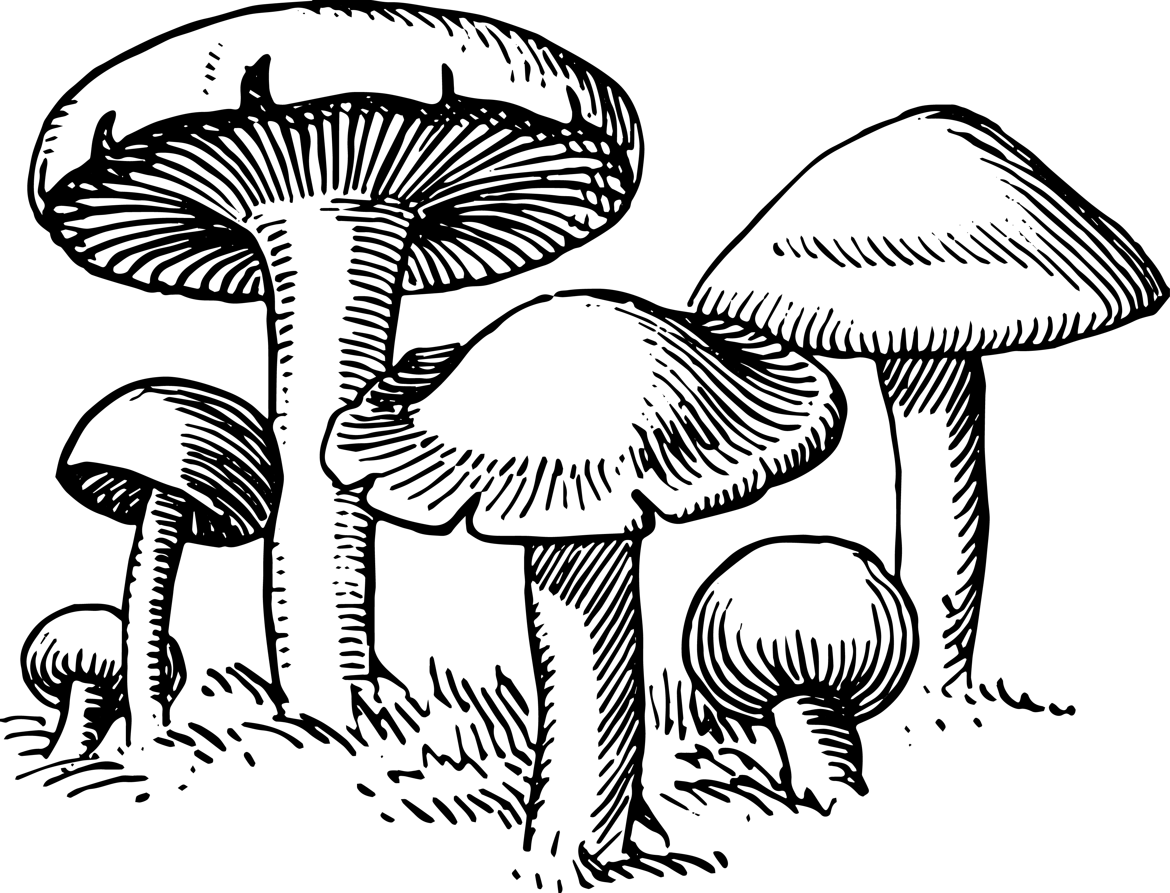 3867x2950 Collection Of Mushroom Outline Drawing High Quality, Free