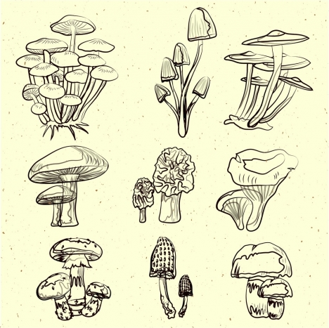 468x467 Mushroom Icons Collection Black White Handdrawn Sketch Vectors