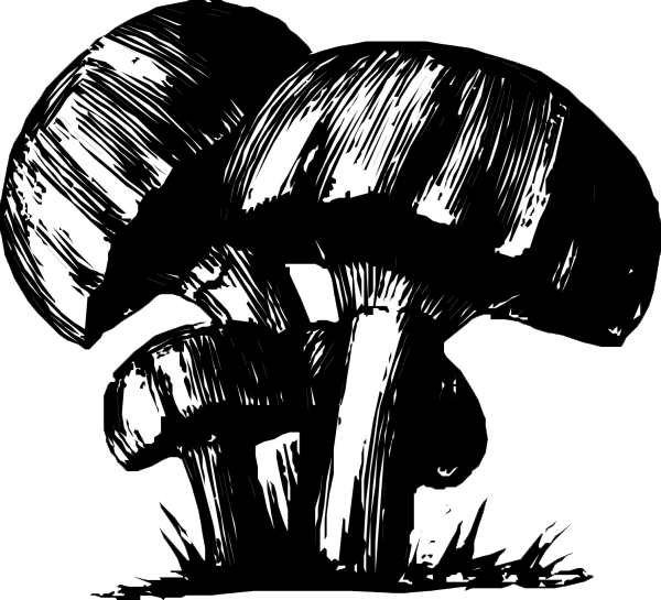 600x545 Black And White Mushroom Drawing