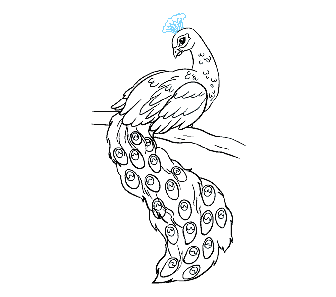 678x600 How To Draw A Peacock In A Few Easy Steps Easy Drawing Guides