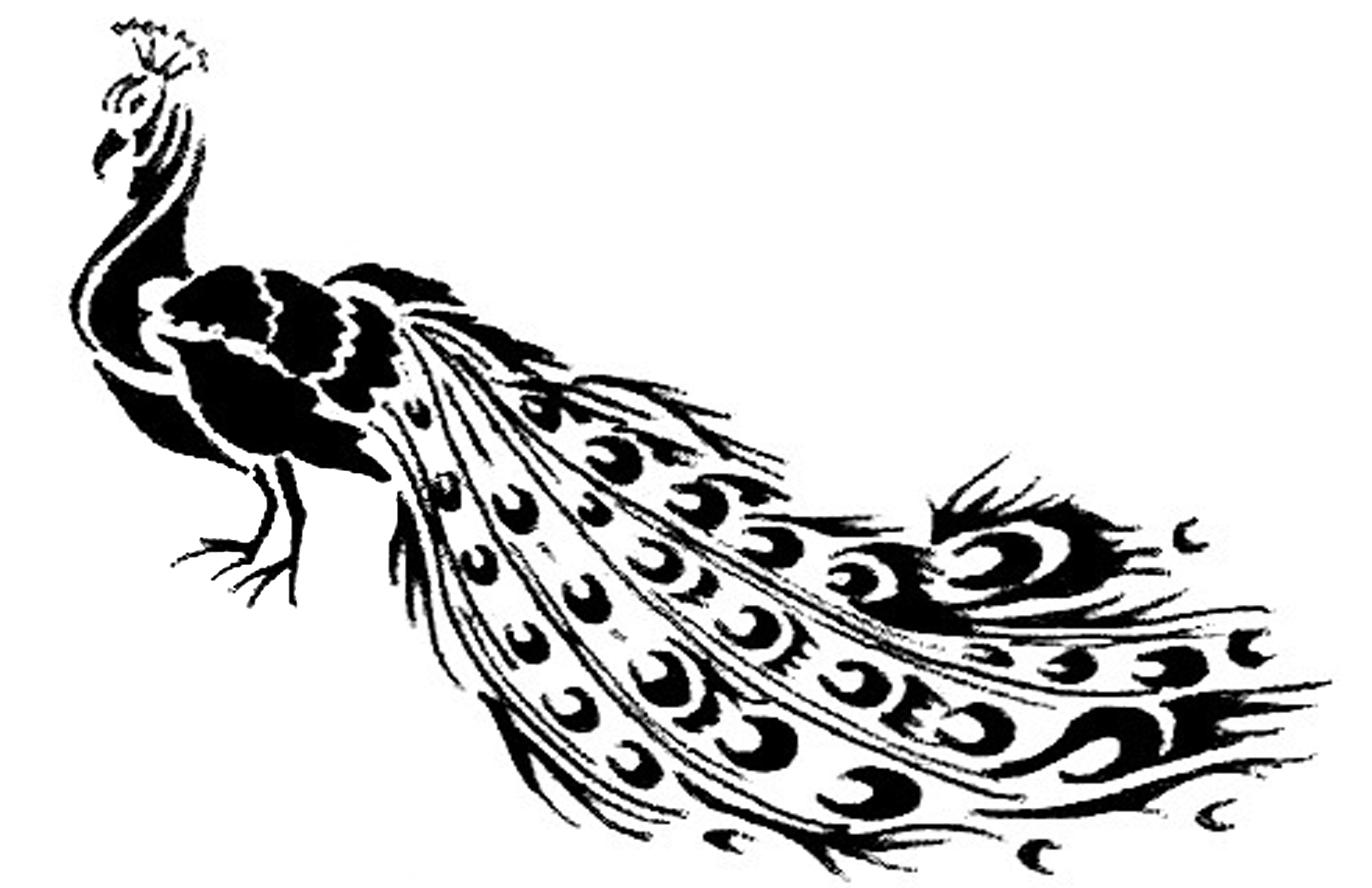 5100x3300 Peacock Black And White Drawing Peacock Drawing Lucmg