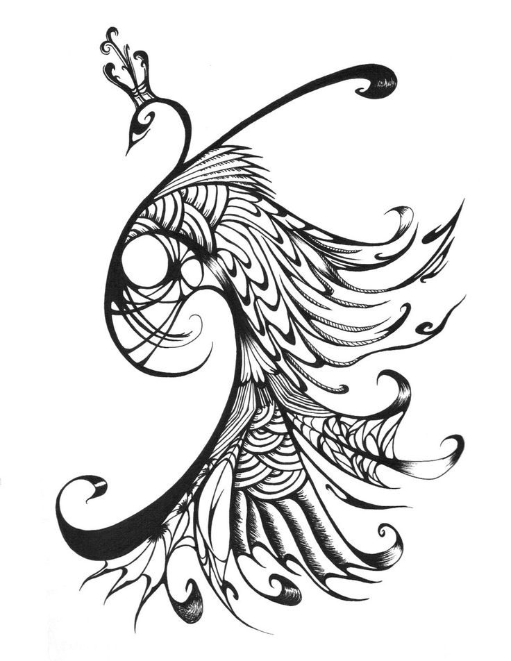 736x952 Peacock Design Black And White Gallery Images)