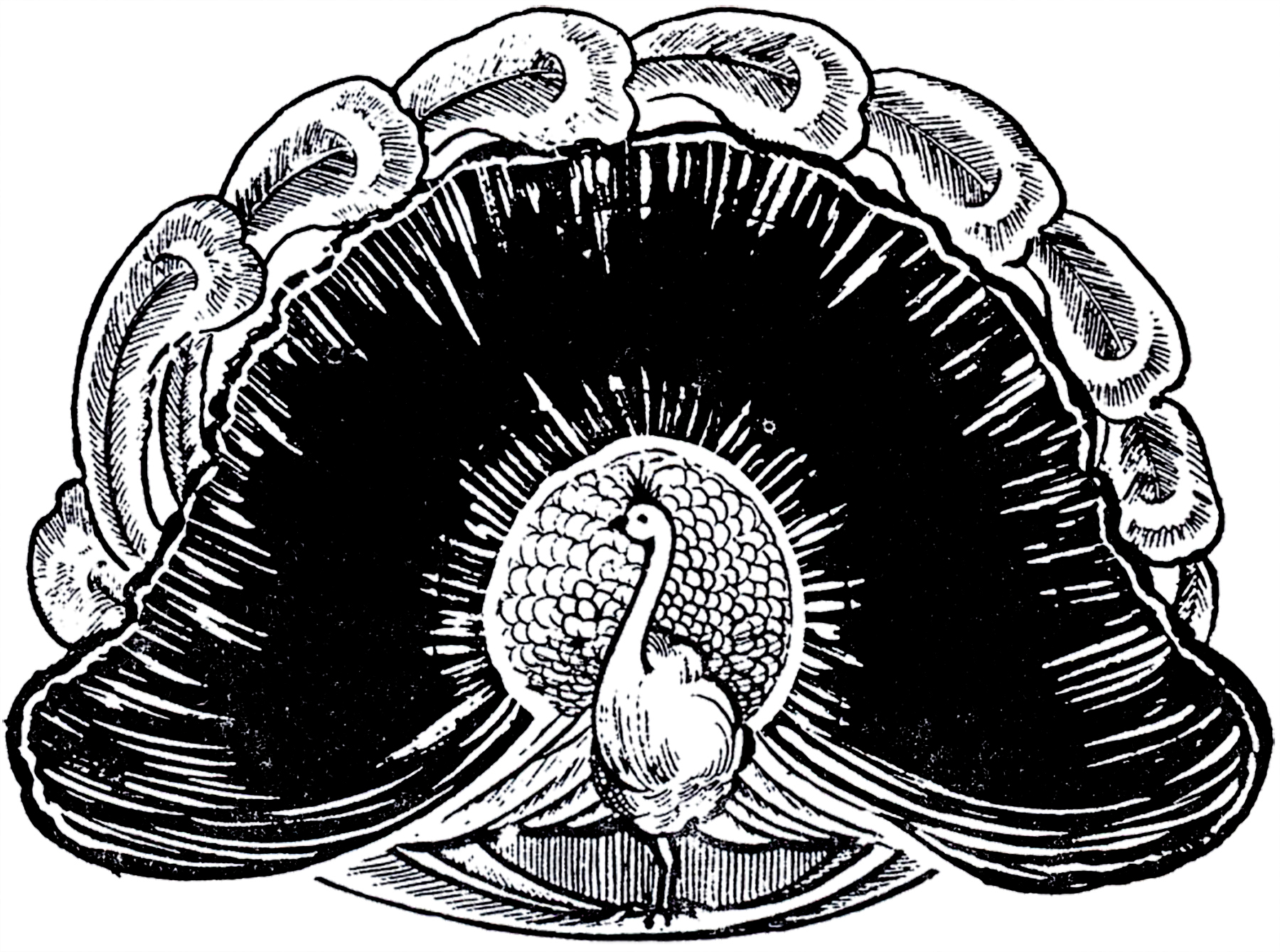 1800x1339 Wonderful Peacock Image