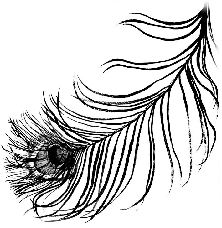 709x728 Back Imgs For Black And White Peacock Feather Design Drawing