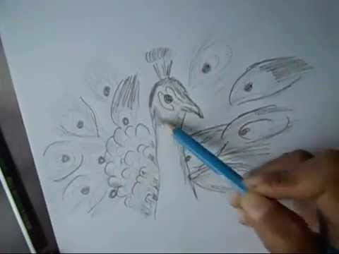 480x360 How To Draw A Peacock With Beautiful Feathers Step By Step