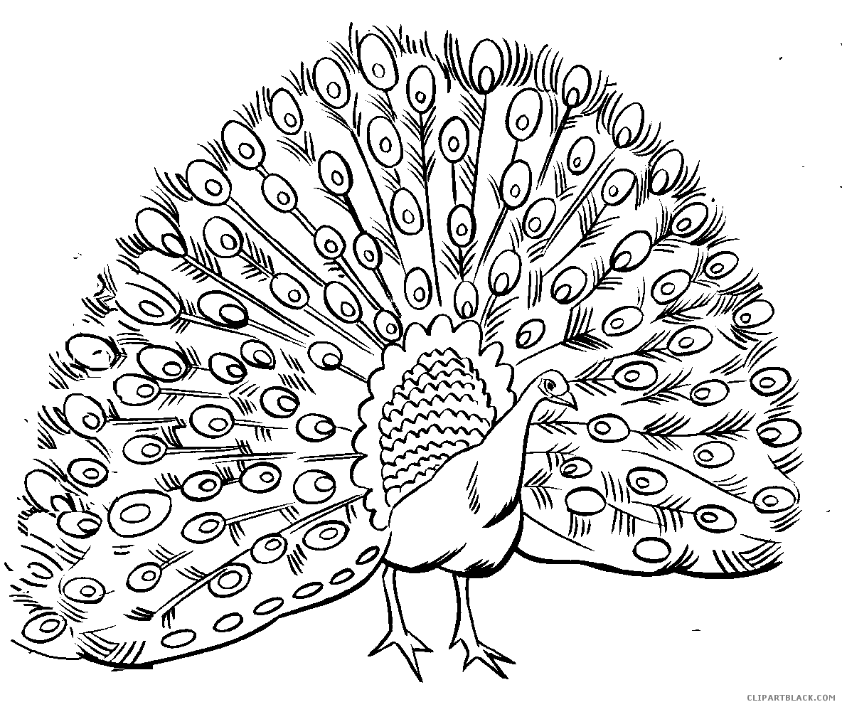 1184x994 Black And White Peacock Animal Free Black White Clipart Images
