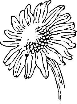 250x337 Black, Outline, Drawing, Sketch, Sun, Flower, White
