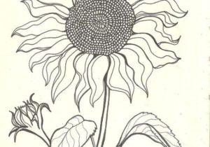 300x210 Drawings Drawing Ideas Sun Drawings Luxury Sun Drawing Design