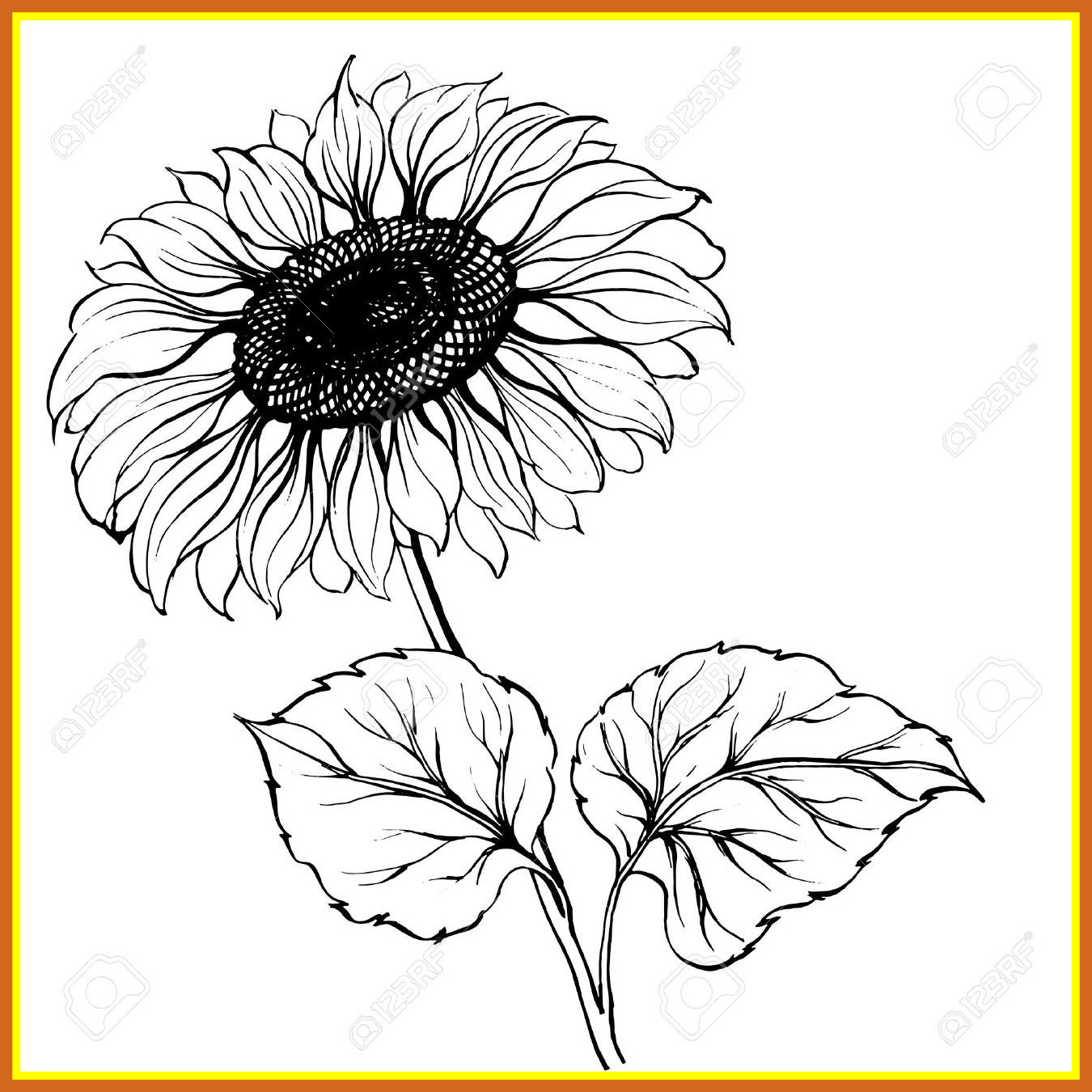 1350x1350 The Best Black And White Sunflower Drawing Stock Pic Of Style