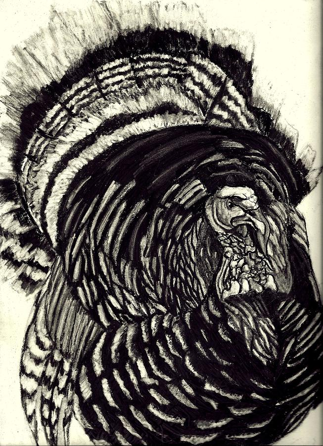 653x900 Charcoal Turkey Drawing By Jay Johnston