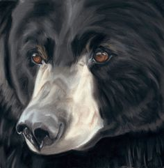 236x241 Black Bear Pen And Ink Drawing Bear Illustration Print Bear