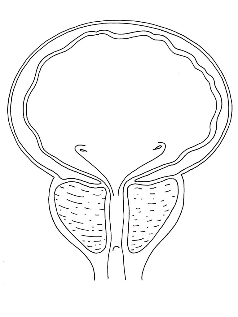 768x1024 Bladder Coloring Pages.jpg