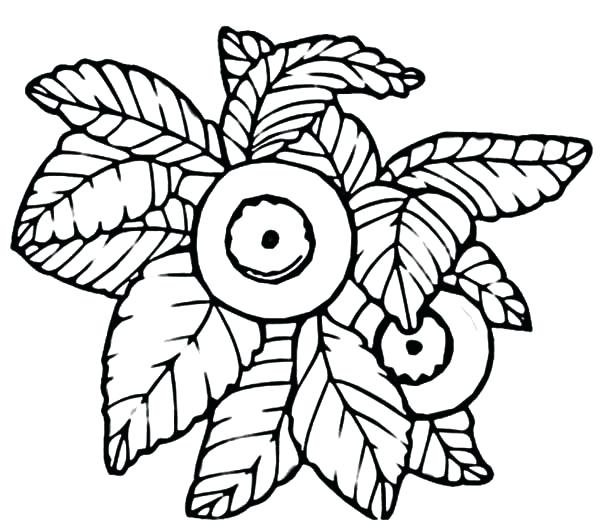 600x521 Blueberry Coloring Page Drawing Blueberry Bush Coloring Pages