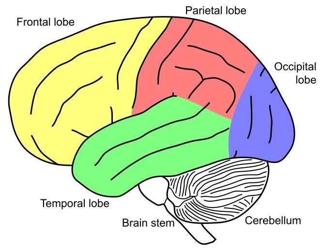 669x519 Neurodevelopment And Socio Economic Status (Ses)
