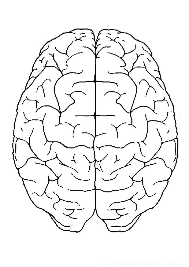 618x874 Brain Coloring Page Brain Coloring Page Brain Coloring Page