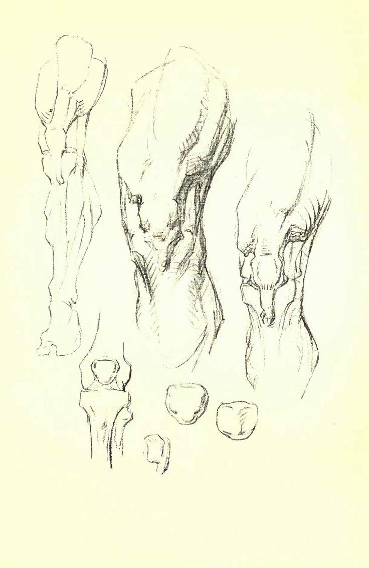 Bridgeman Figure Drawing at GetDrawings com   Free for personal use
