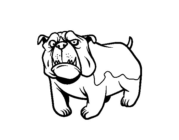 British Bulldog Drawing