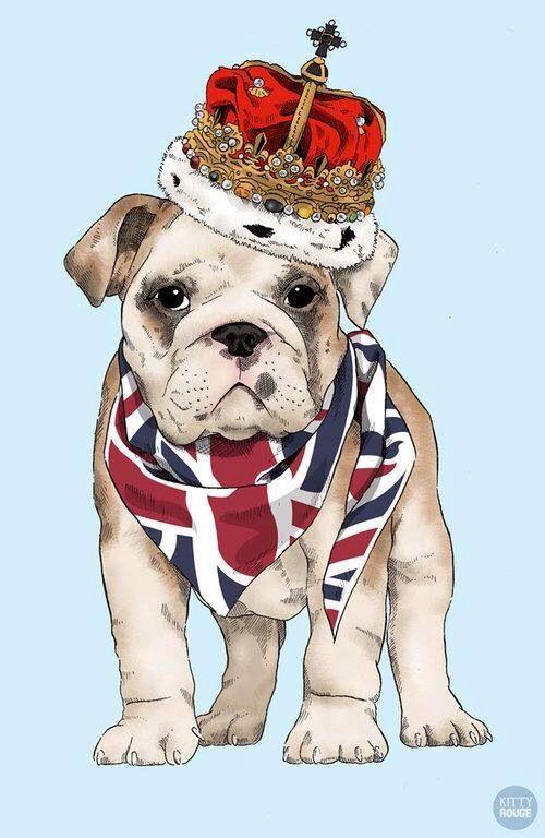 500x768 British Bulldog English Bulldogs British, English