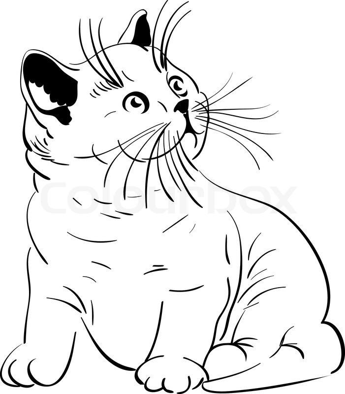 701x800 Sketch Of A Small British Shorthair Pedigree Kittens Sitting