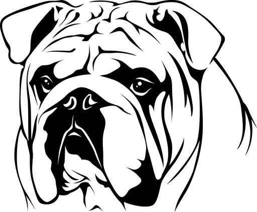 512x422 English Bulldog Line Drawing